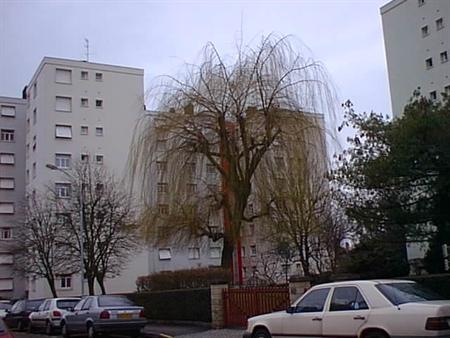 Location-4 pièces et +-Lorraine-MOSELLE-MONTIGNY-LES-METZ